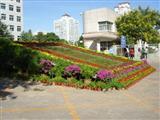 国庆节花卉摆放