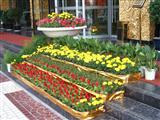 酒店门口花卉摆放