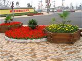 道路花卉摆放实景