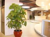 大厅立柱花卉摆放