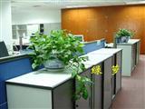 办公区花卉摆放