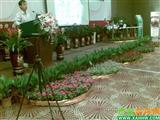 会议室花卉摆放