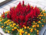 广场花卉摆放实景