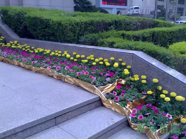 花卉平面图ps素材