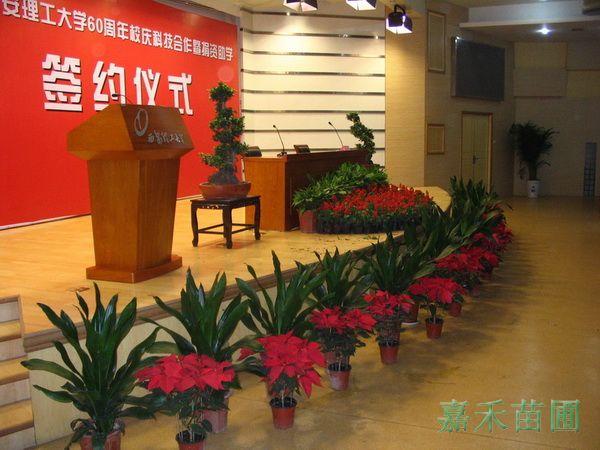 打造花卉绿植租赁,租摆,租售,养护 舞台