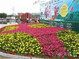 节日花卉摆放实景