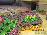 舞台花卉摆放实景