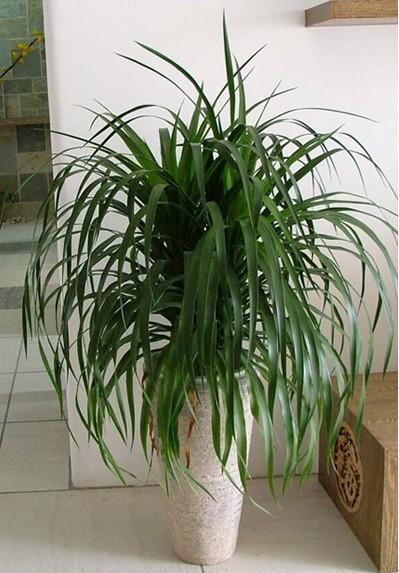 卧室里放什么植物比较好?
