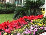 公园花卉租摆