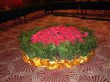 会议室花卉摆放实景