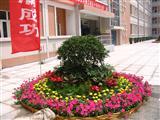 学生公寓门前花卉摆放实景