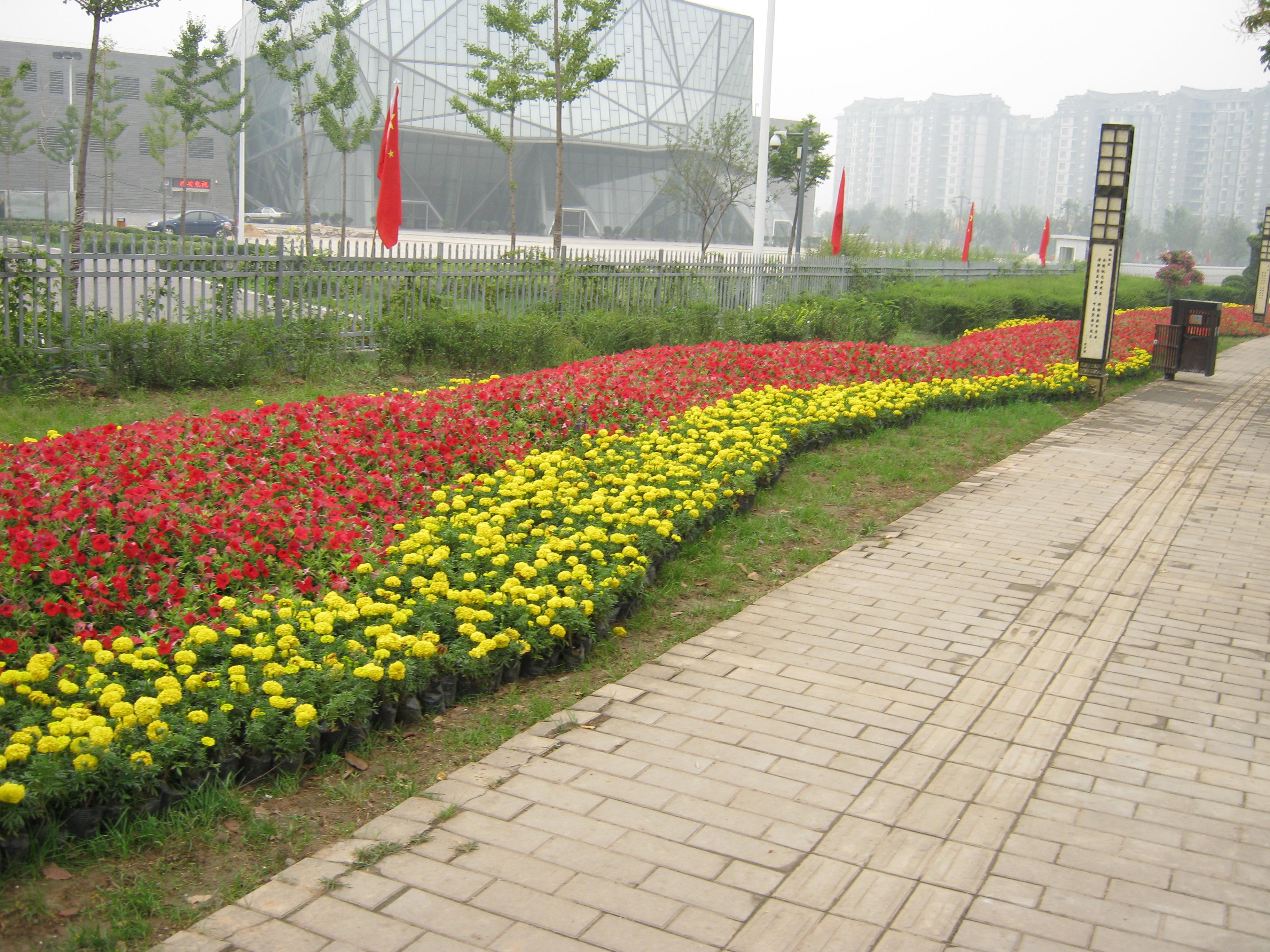 壁纸 成片种植 风景 植物 种植基地 桌面 3648_2736