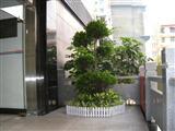 办公区花卉摆放实景