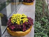 阳台花卉摆放实景