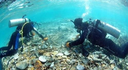 南沙群岛的海底海洋生物图片