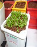 陶化营养土
