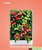 开门见喜 移动智能植物墙 室内花卉绿植盆栽 美观净化空气