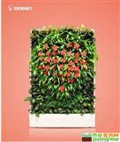 森情款款 移动植物墙 室内花卉绿植盆栽 美观净化空气