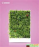 一帘幽梦 移动智能植物墙 室内花卉绿植盆栽 美观净化空气