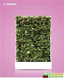 孔雀开屏 移动智能植物墙 室内花卉绿植盆栽 美观净化空气