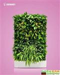 财源广进 移动智能植物墙 室内花卉绿植盆栽 美观净化空气