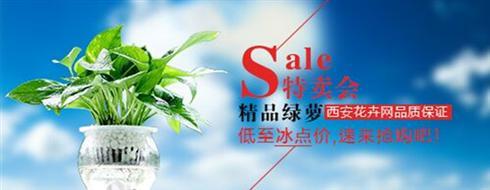 【特卖会】西安花卉网绿萝低至冰点价!速来抢购吧!