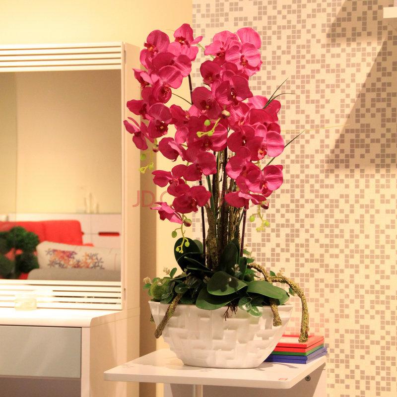 客厅风水花卉的选择与摆放