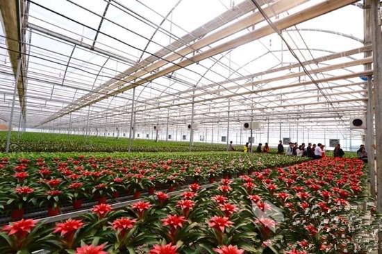 中国西安花卉网,中国西安花卉市场网,西安苗木网,中国