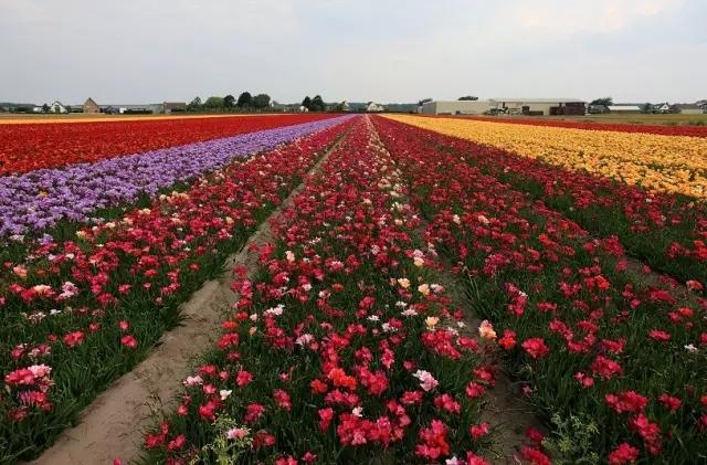 民宿休闲型       目前市场上慢慢兴起来以花卉农庄为载体的民宿旅游.