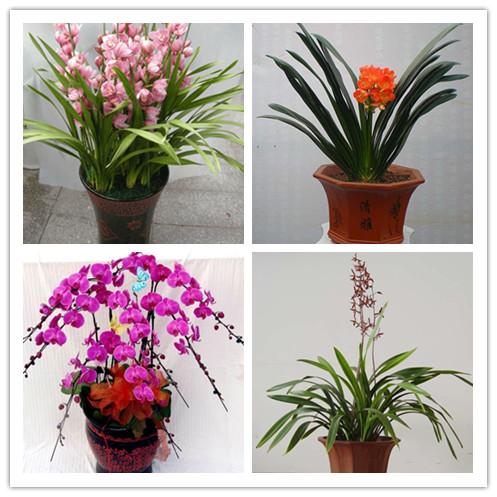 平面构成花卉或动物正负形