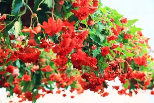 主办单位:陕西省花卉协会    德国乐海公司 承办单位:长安区花卉协